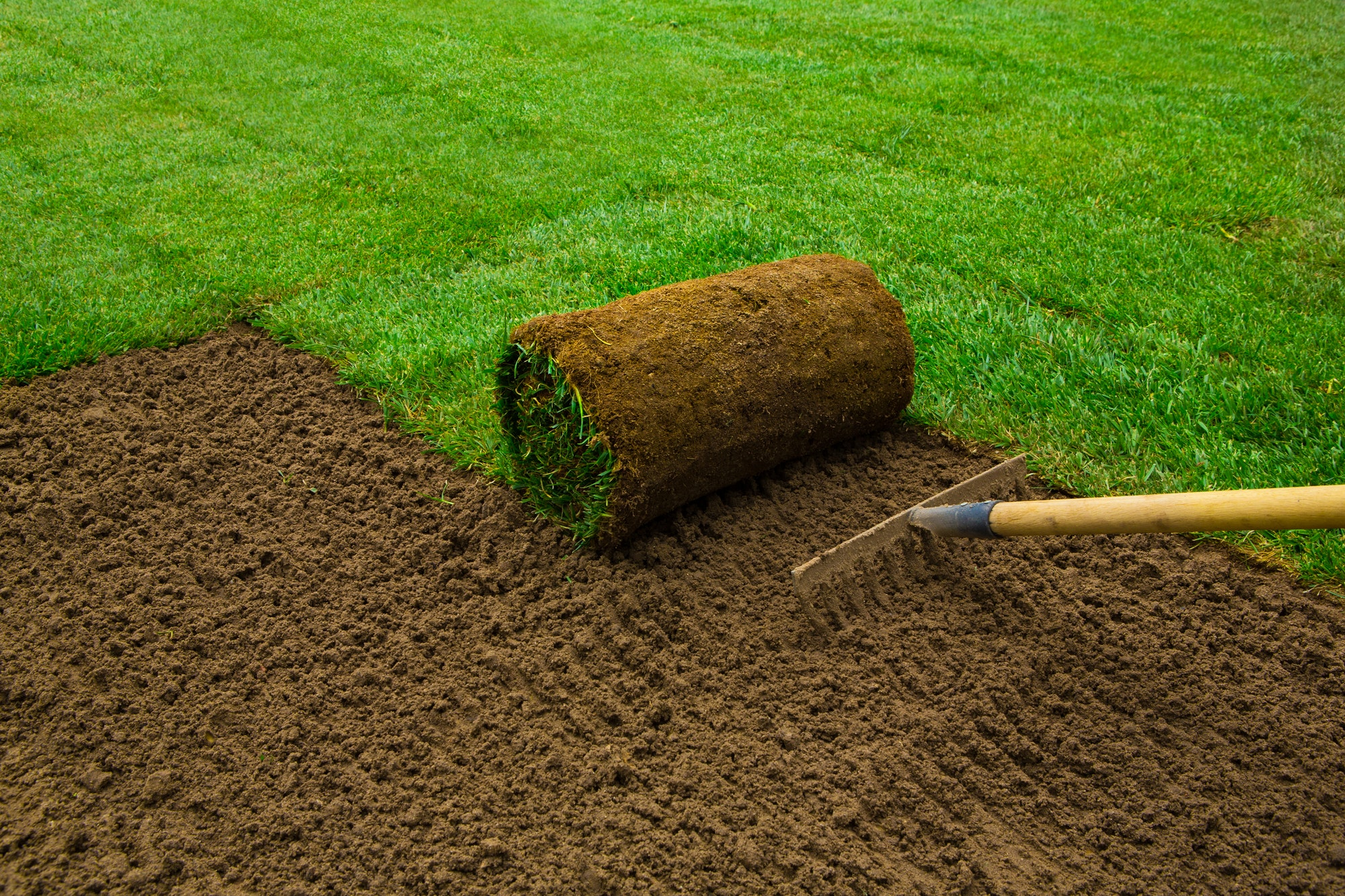 Know which kind of Sod is best in Georgia?
